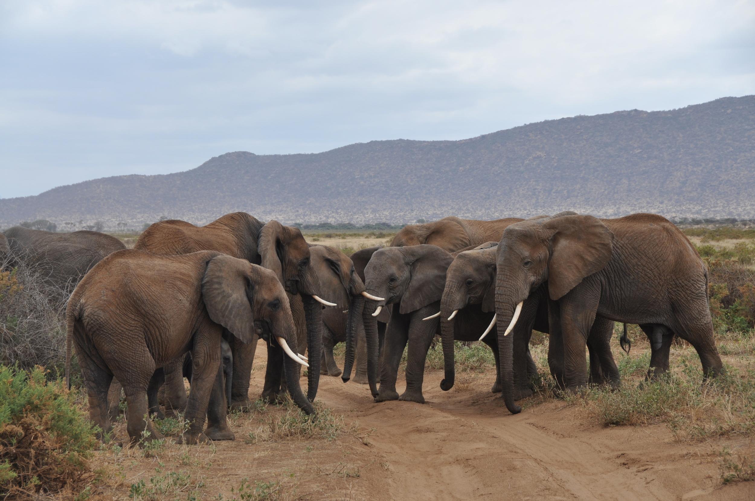 Big Five Elephants Maasai Mara, Kenya, Africa