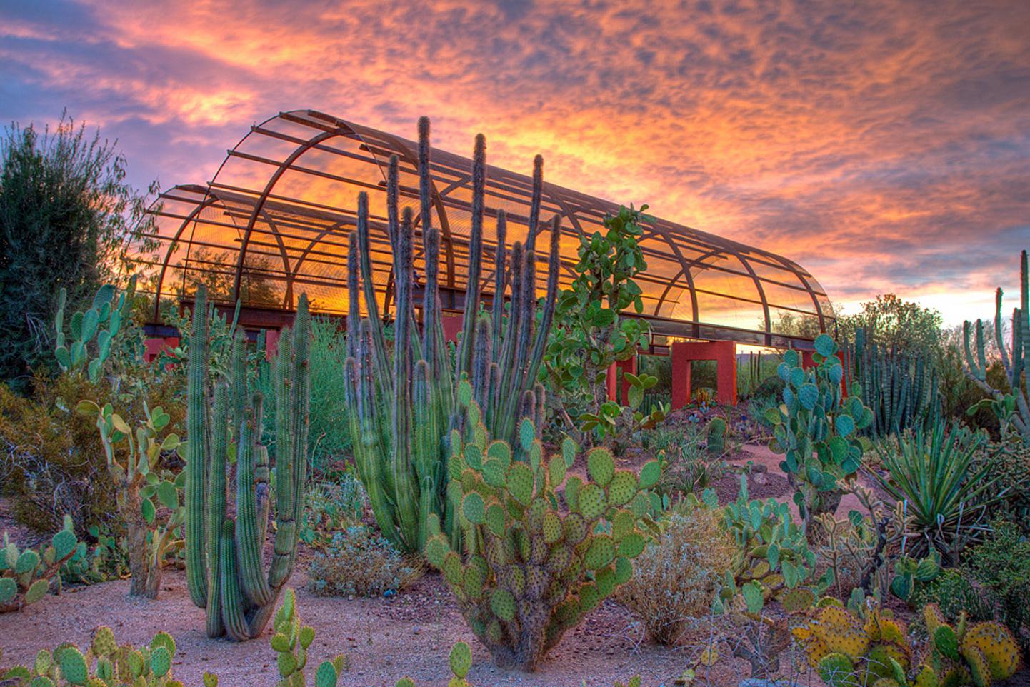 Desert Botanical Garden - Photo Courtesy Desert Botanical Garden