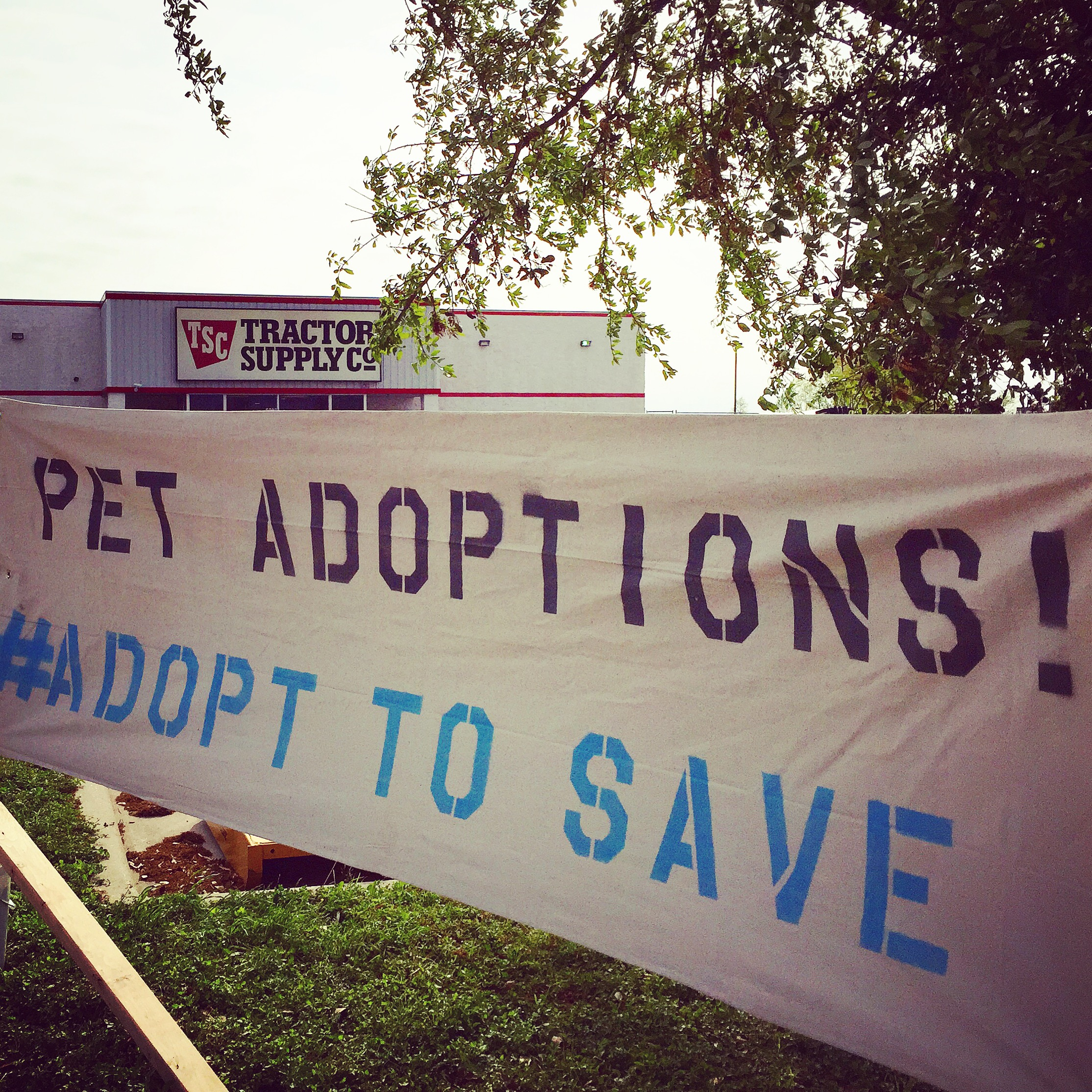 Adoption Day At Tractor Supply A Life To Live