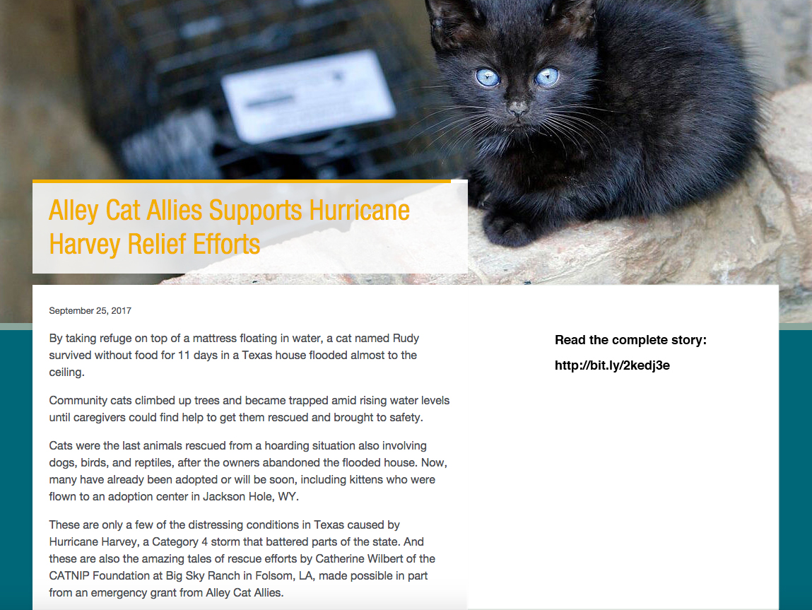 09.25.17 - Alley Cat Allies Website - Hurricane Harvey.jpg