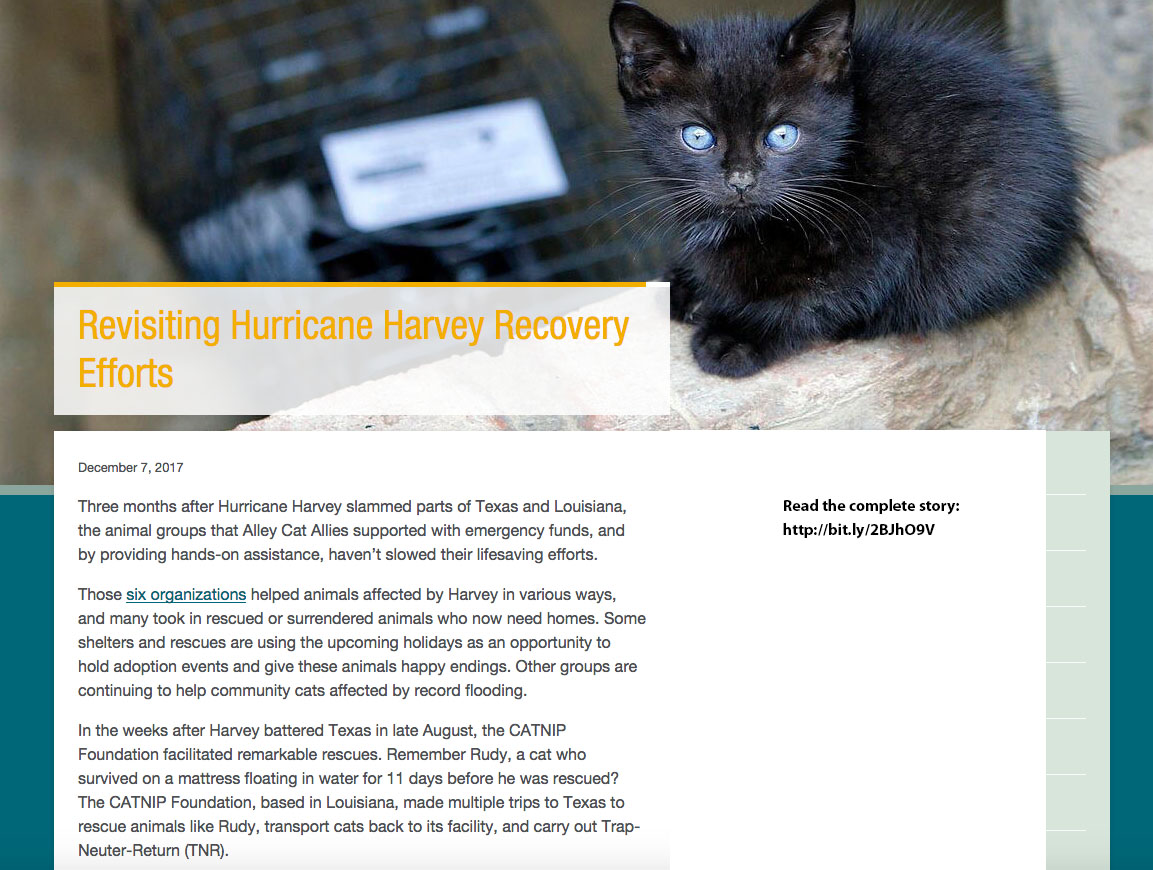 12.07.17 - Alley Cat Allies Website - Harvey Recovery Update.jpg