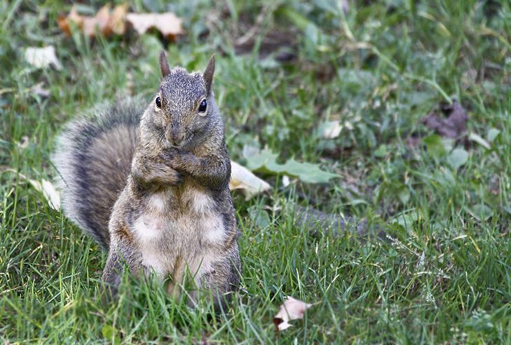 Breakdancing Squirrel :)
