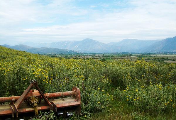Fields of Greece