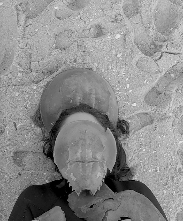 Leah+Michaels+--Horseshoe+Crab+Burial.png