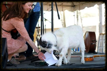 The time the goat ate our set list at the Charleston Bluegrass Festival 2013