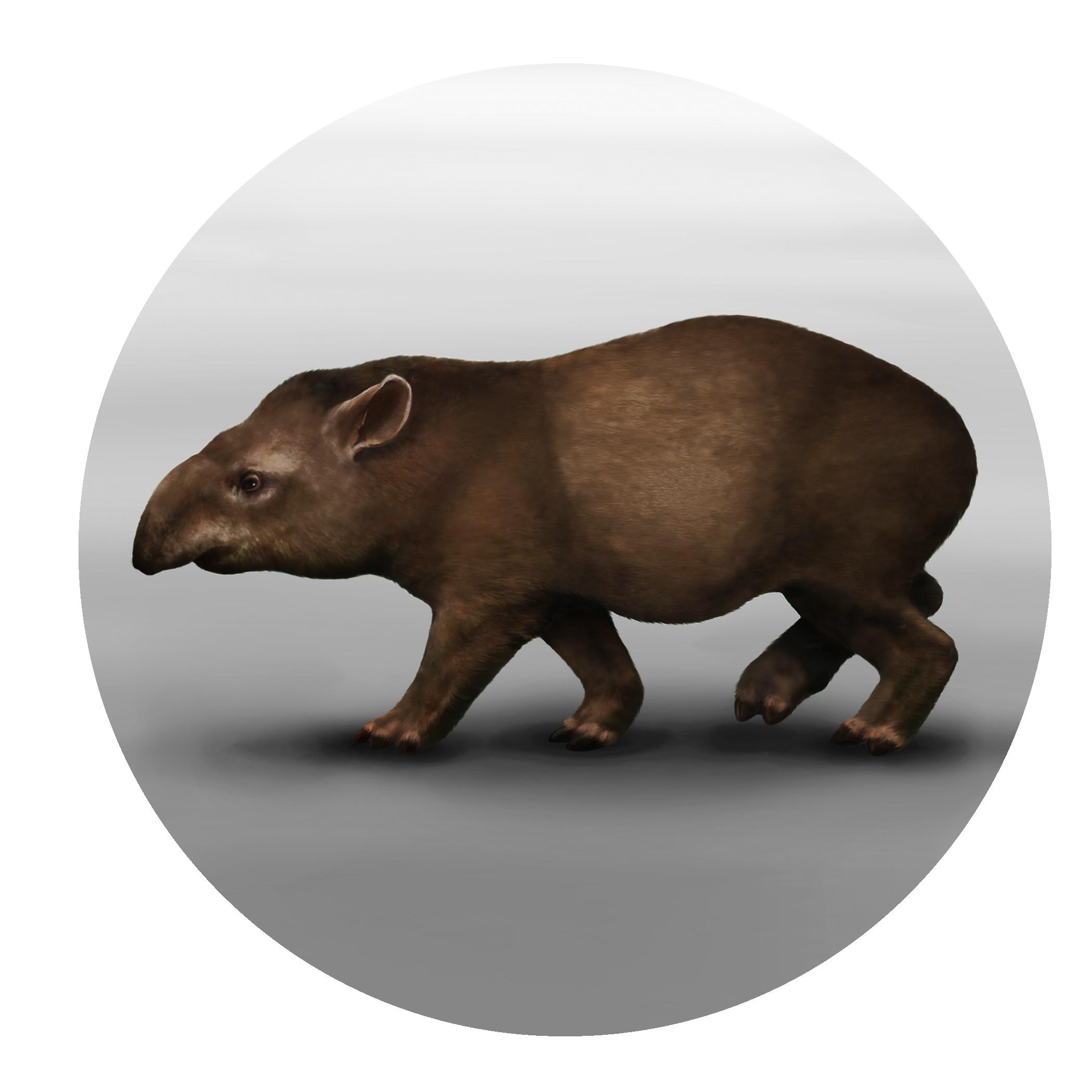 Extinct Tapir.jpg
