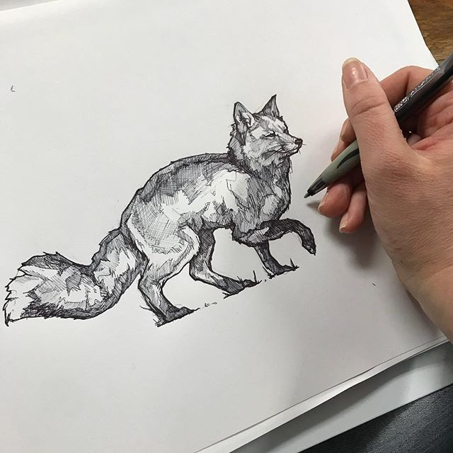 Pen drawing pre-photoshopification for some signage. #pendrawing #sketch #vulpesvulpes #redfox #naturalistnotebook