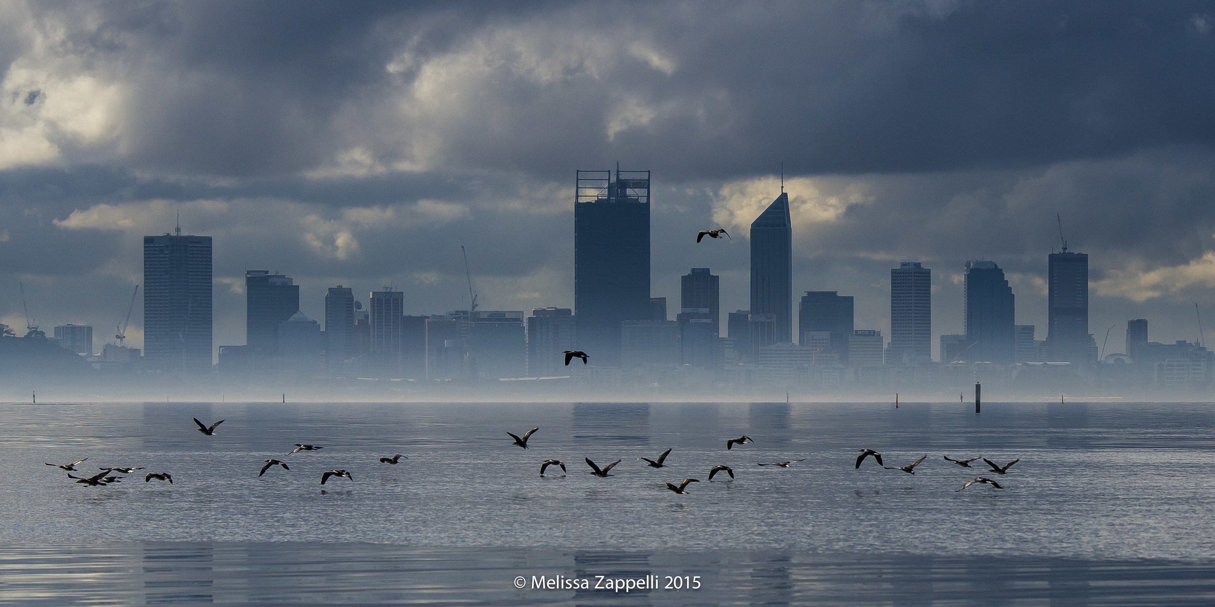 Perth City on a Stormy Day - Viewed from Alfred Cove - Pied Cormorants in Flight