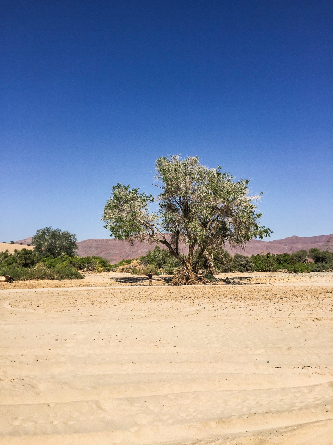 Answering a call of Nature, in the middle of Nature. After years of drought, I think the tree appreciated it. Purros, Namibia. June, 2016.