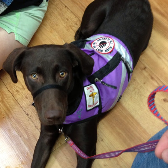 Purple Service Dog.jpg