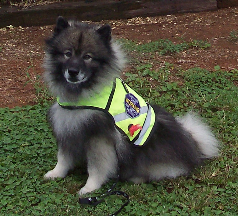 Service dog in Neon Vest.jpg