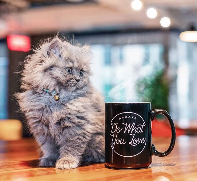Best way to enjoy a Monday: good coffee & kitty purrs ❤️😸😻 #MondayVibes #TGIM