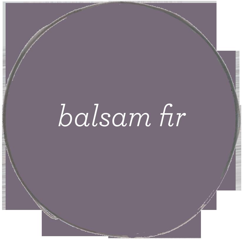 balsam fir.jpg