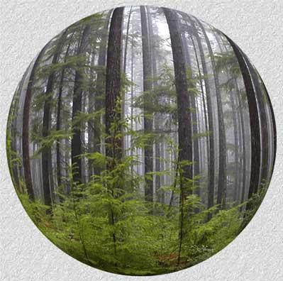 forestsphere.jpg