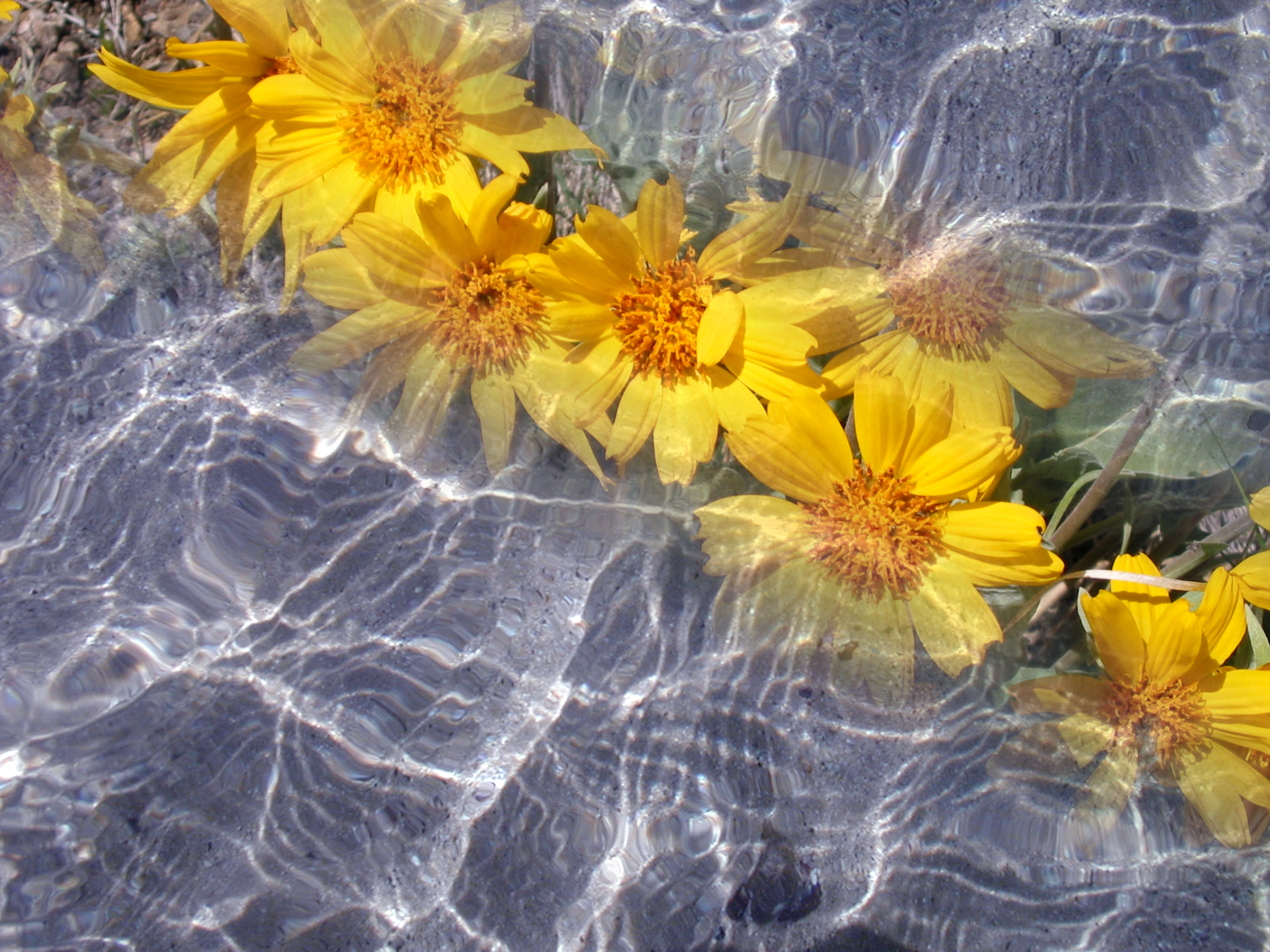 flowers and water.png