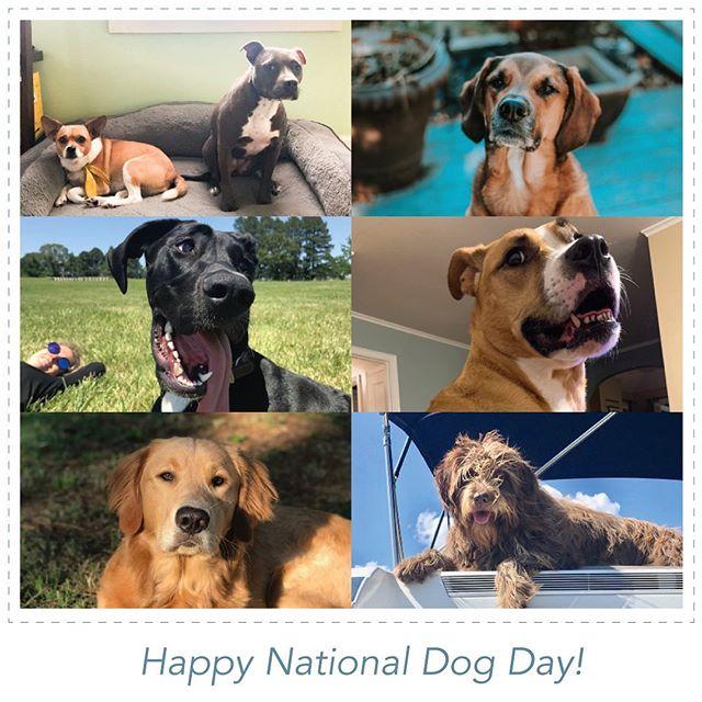 "We love our Hemline pups Madison ""Hotdog"", Xena, Hank, Rhodes, Bella, Joey and Max. #nationaldogday"