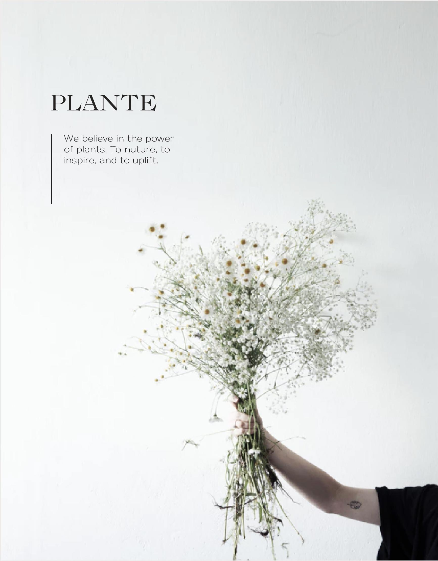 plante02Asset 26.jpg