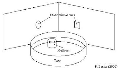 source: http://paul-baxter.blogspot.com/2007/02/morris-water-maze-applications-to.html