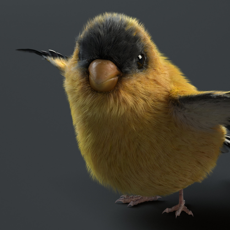 daniel-garcia-bird-front.jpg