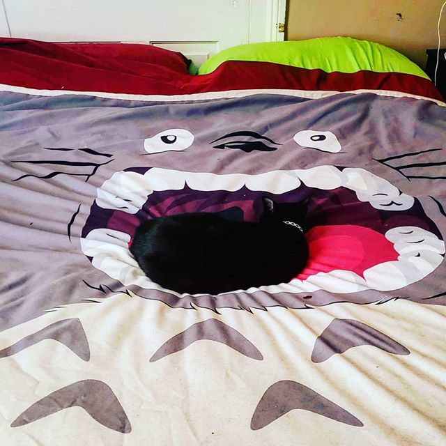 So it's hard to see, but there's a cat sleeping in Totoro's mouth. That's Pharoah. I adopted him in March! He's 2 years old and loves to cuddle. This is where I find him when he's not messing with Snake, my other cat. Or following me around the place begging for cuddles. #caturday #catsofinstagram #blackcat #housepanther