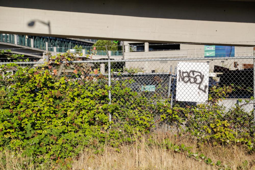 Seattle-87.jpg