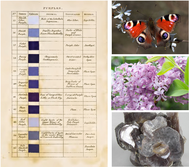 [ IMAGE SOURCE:  Purples ,  Butterfly ,  Lilacs ,  Stone  ]
