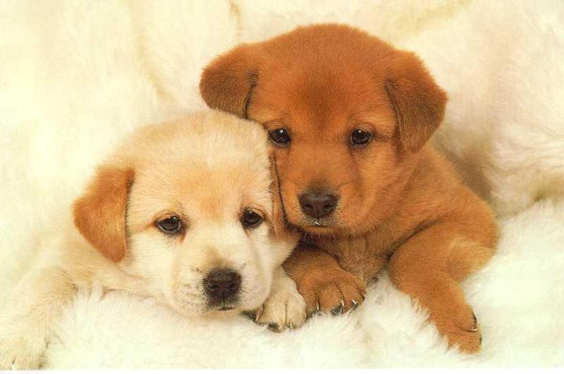 Two puppies! This post is delivering a double dose of adorableness ty http://puppytoob.com