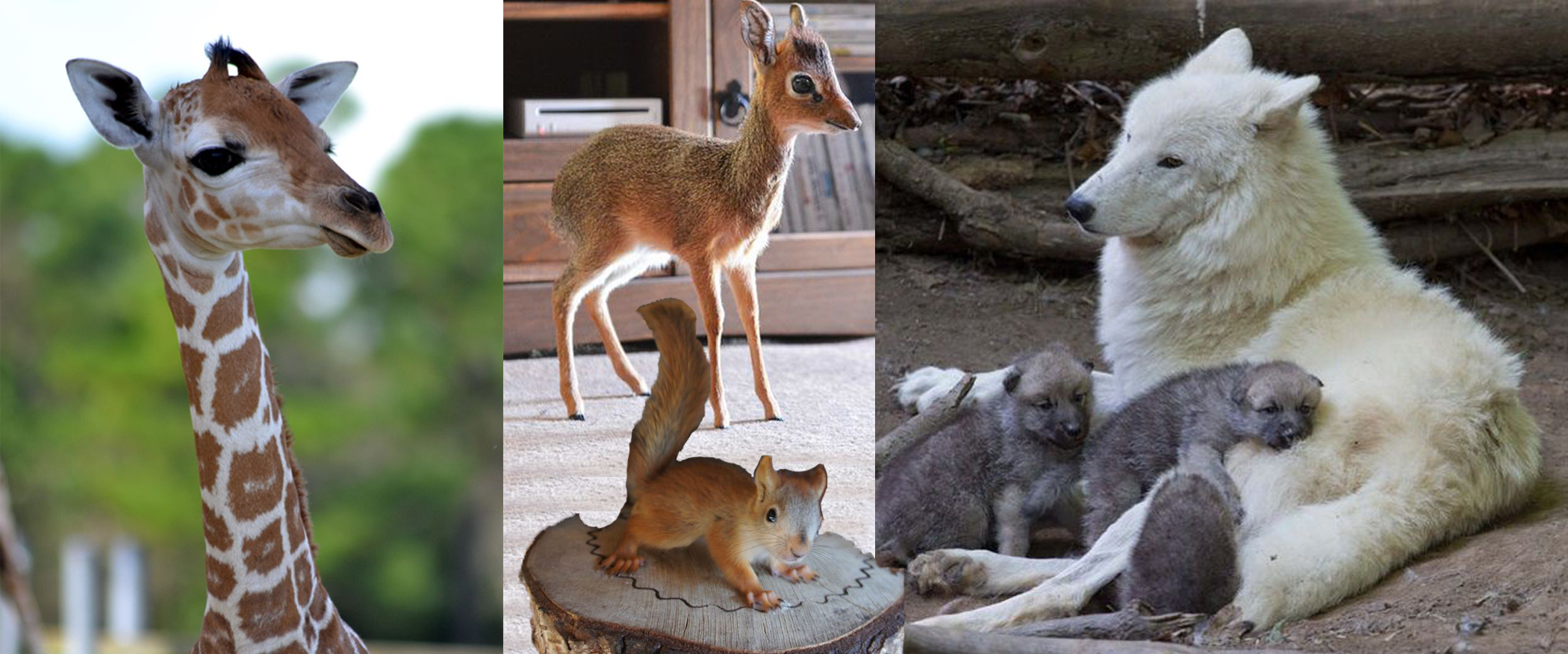 Animal Cast 1.png