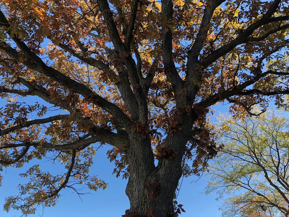 Nov update tree.jpg