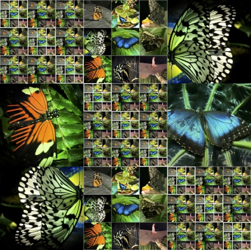 Butterfly Collage #1
