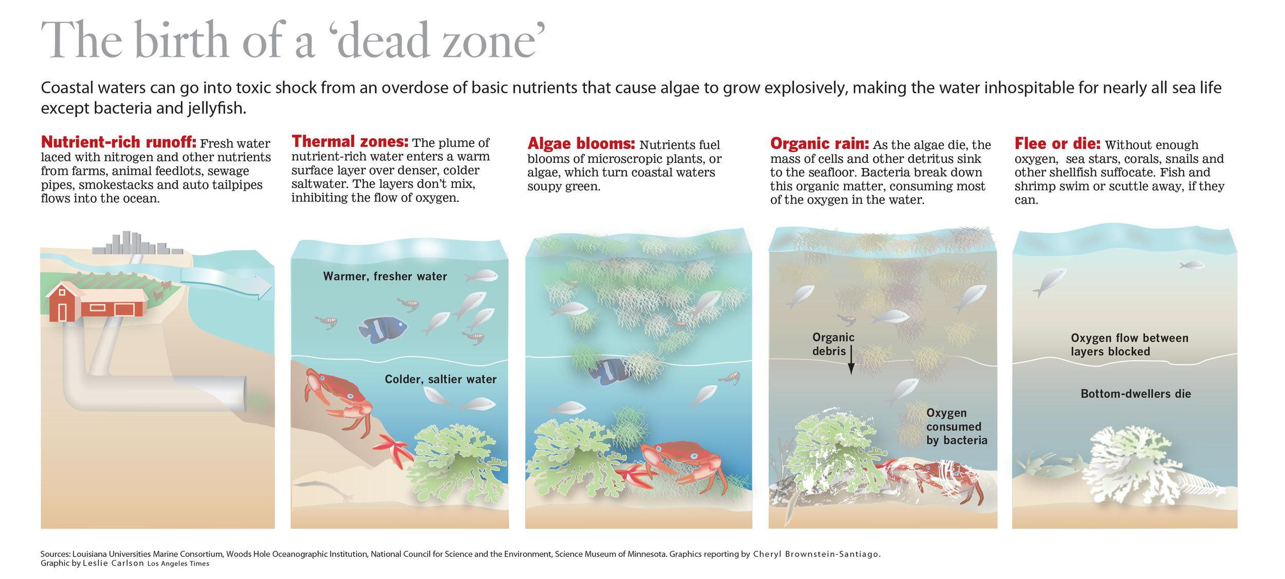 me-Oceansdeadzone_30FINAL.jpg