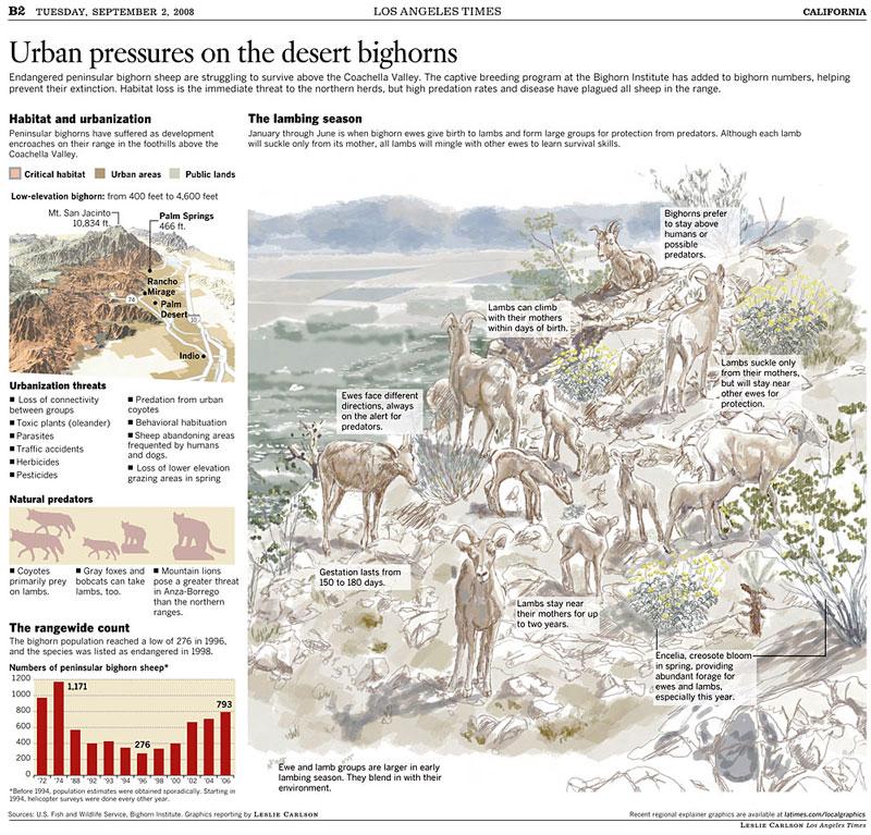 Urban pressures on the desert bighorns