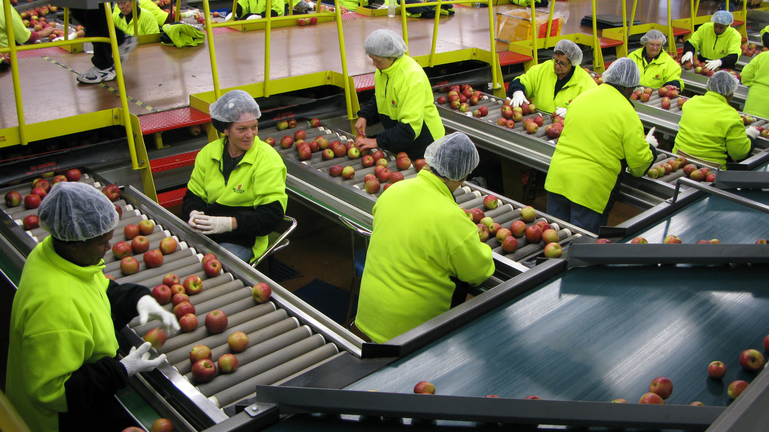 Fruit Sorting Two.jpg