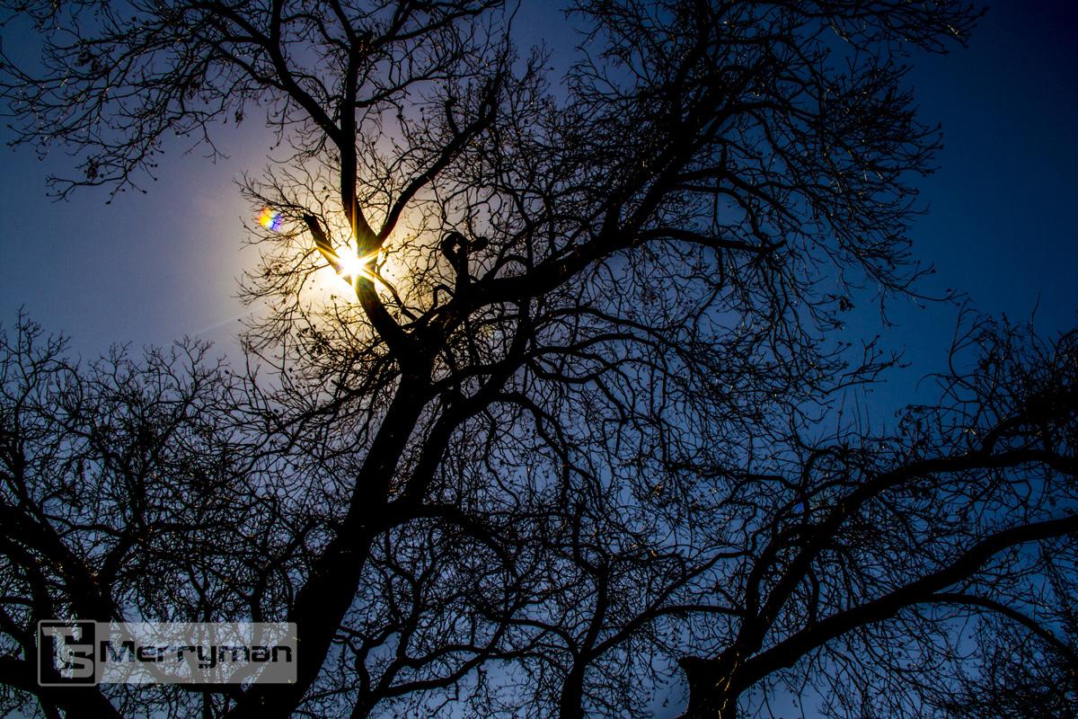 TSMerryman_Nature033.jpg