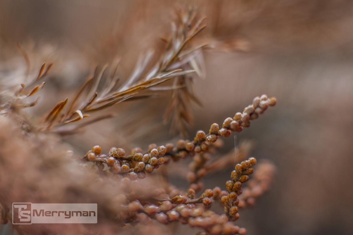 TSMerryman_Nature036.jpg