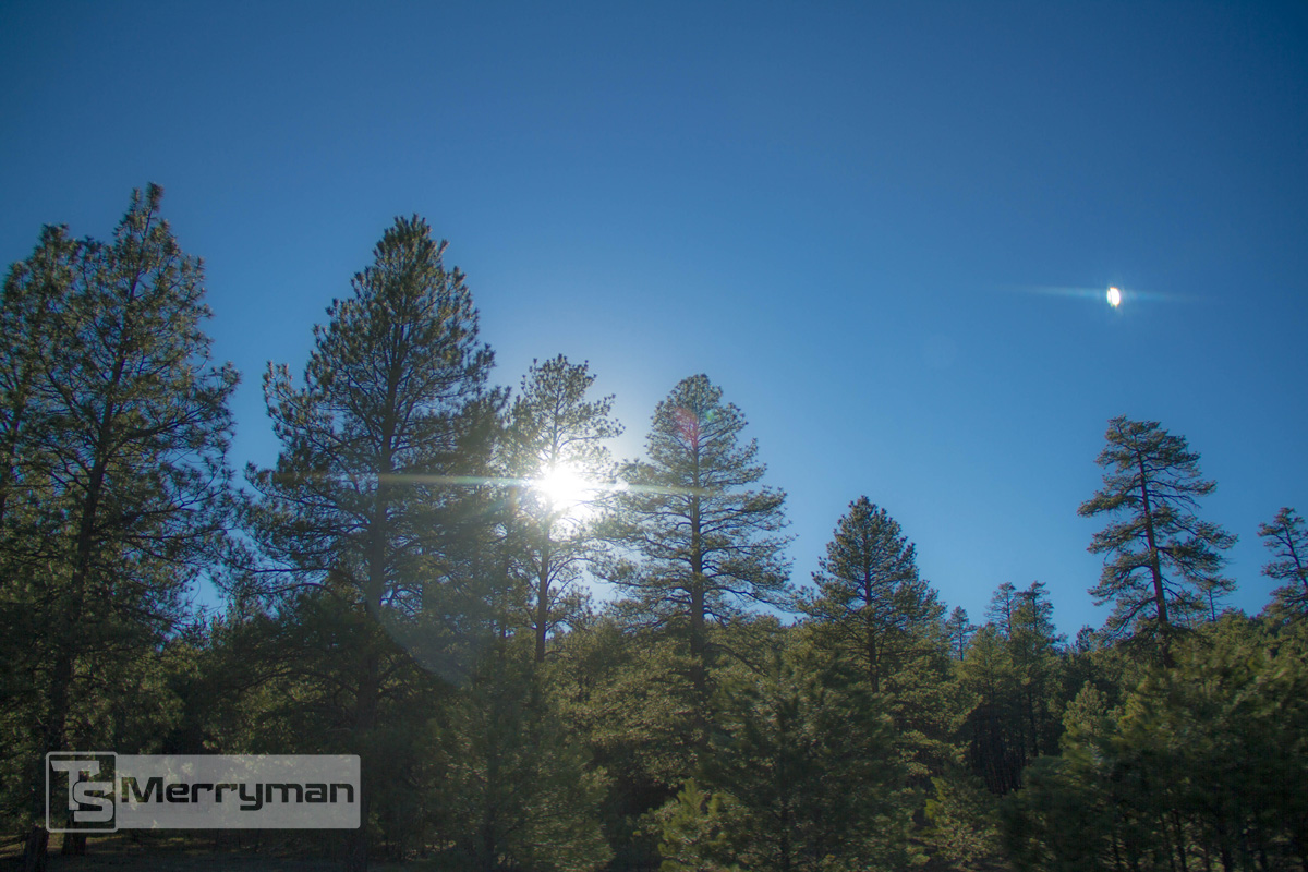 TSMerryman_Nature049.jpg