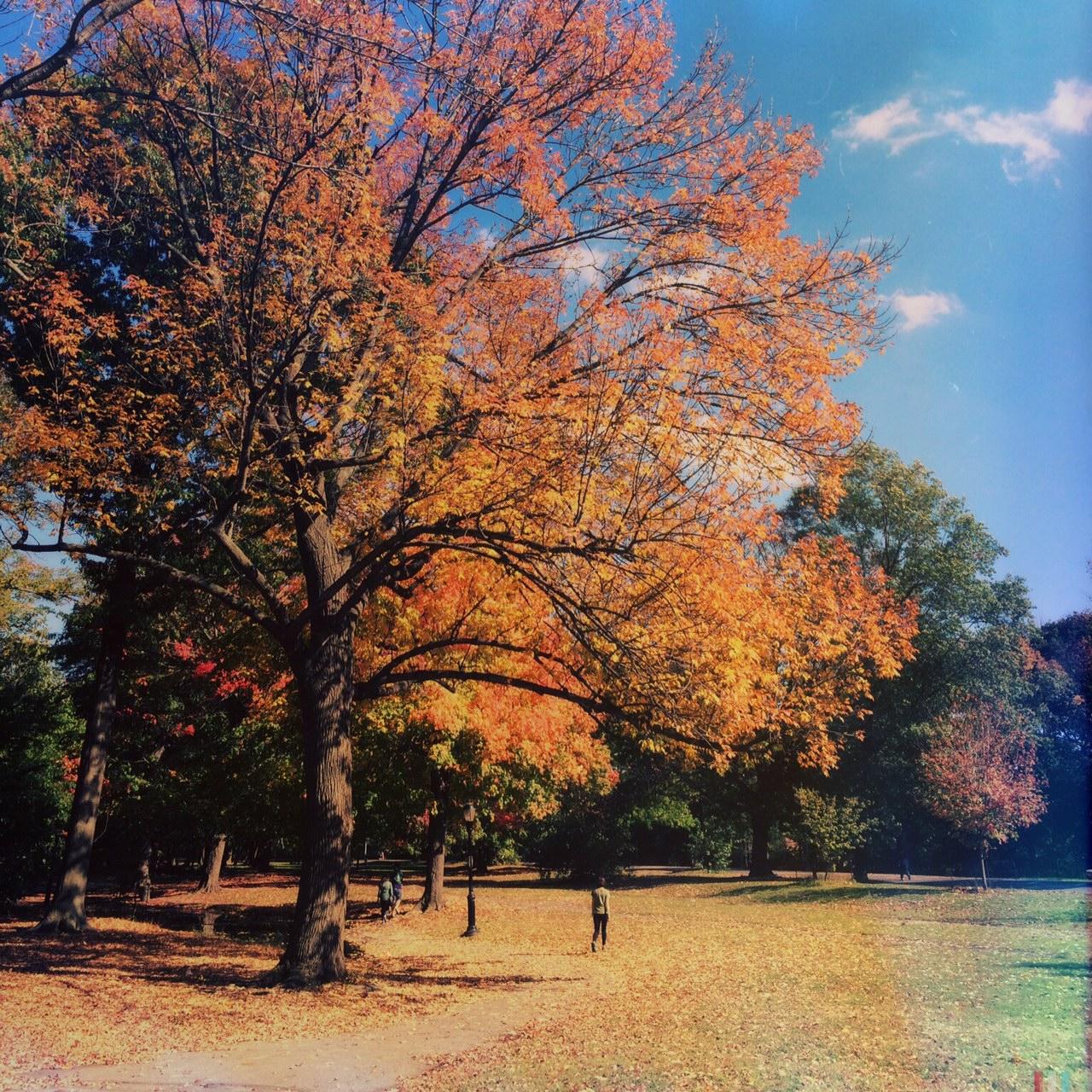 Take a stroll along the many pathways, Prospect Park