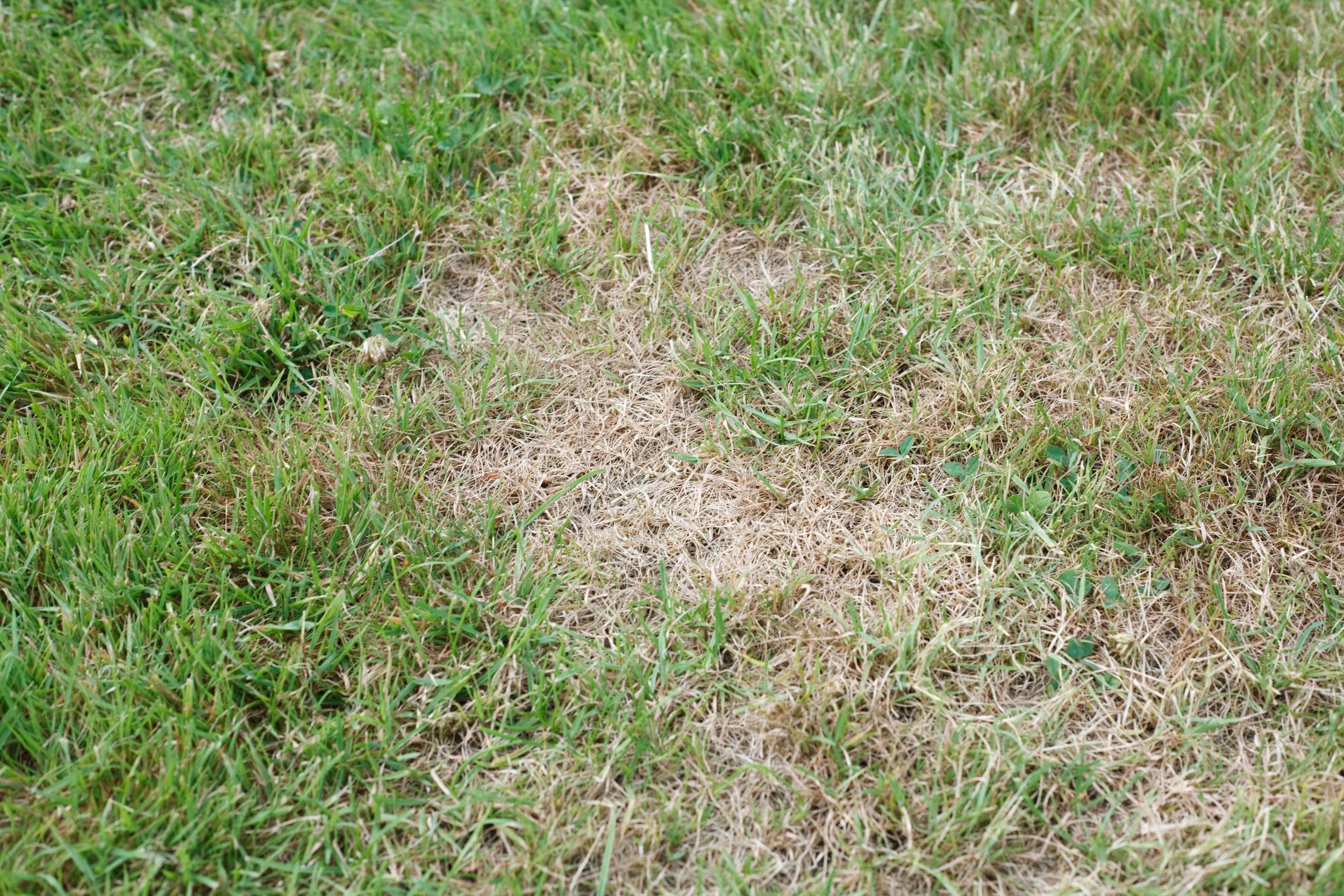 Redding Lawn Analysis