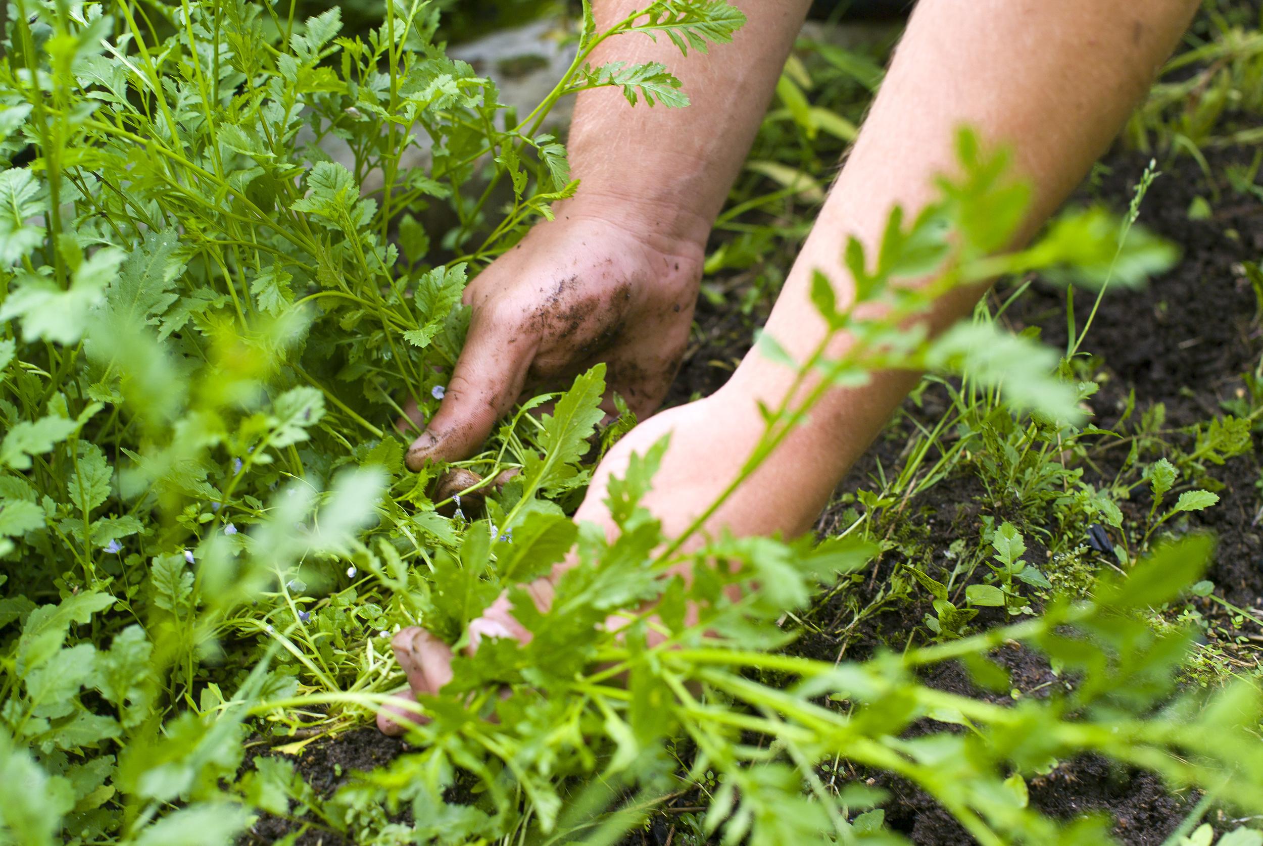 Redding Fertilization & Weed Control