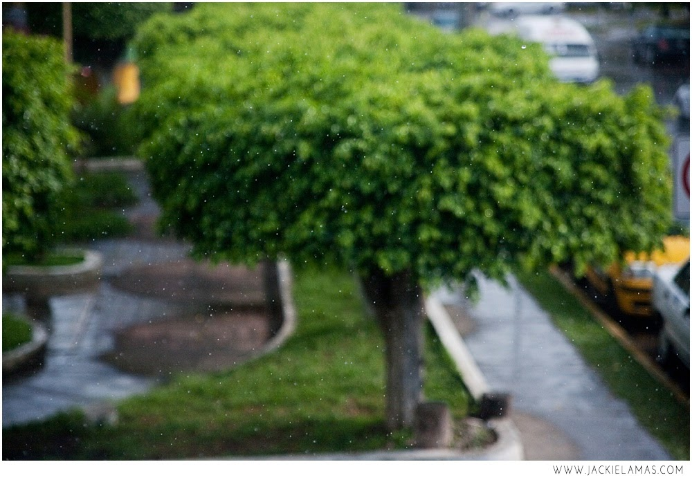 rain_jackielamas.jpg