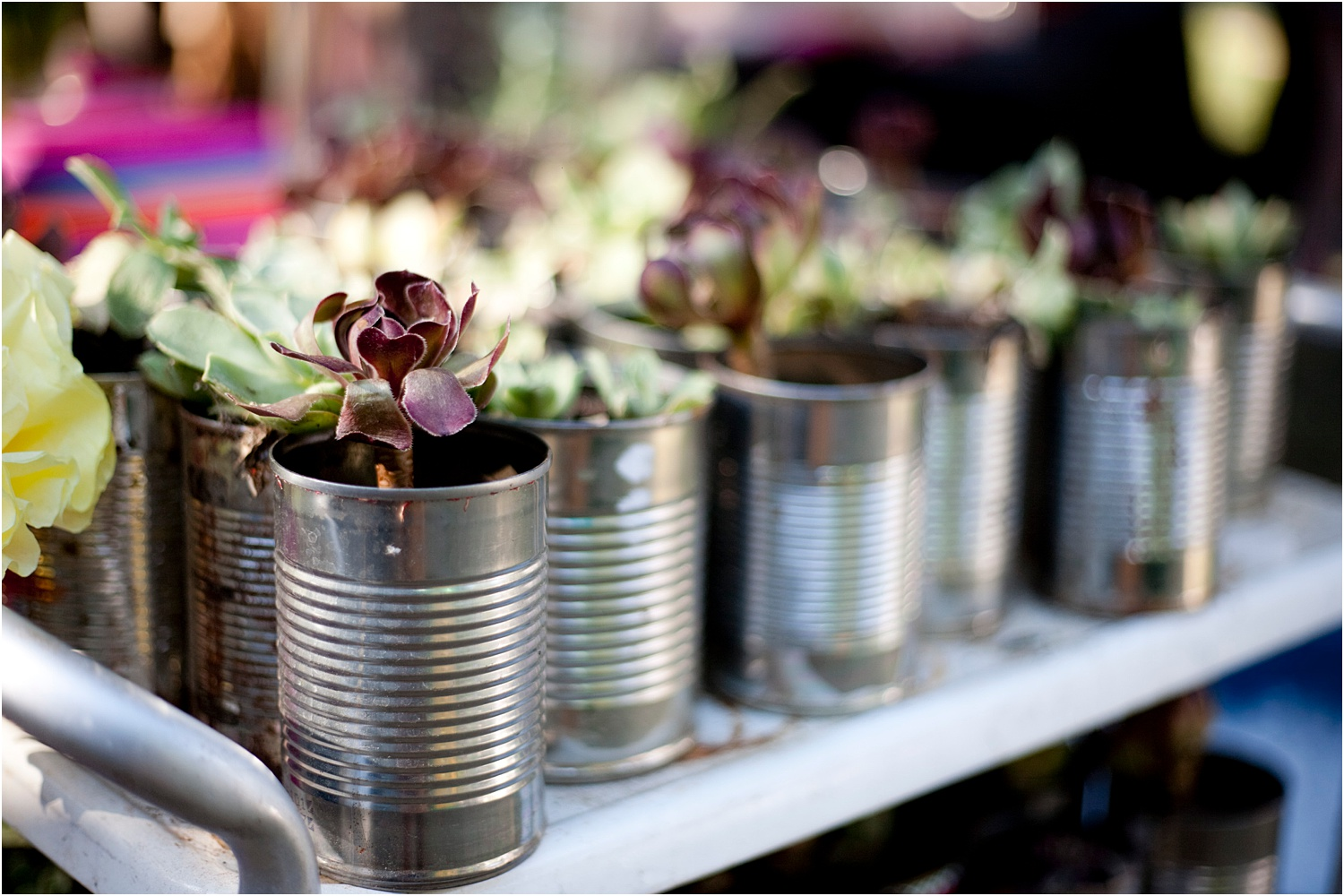 green-wedding-eco-friendly-favors-plants.jpg