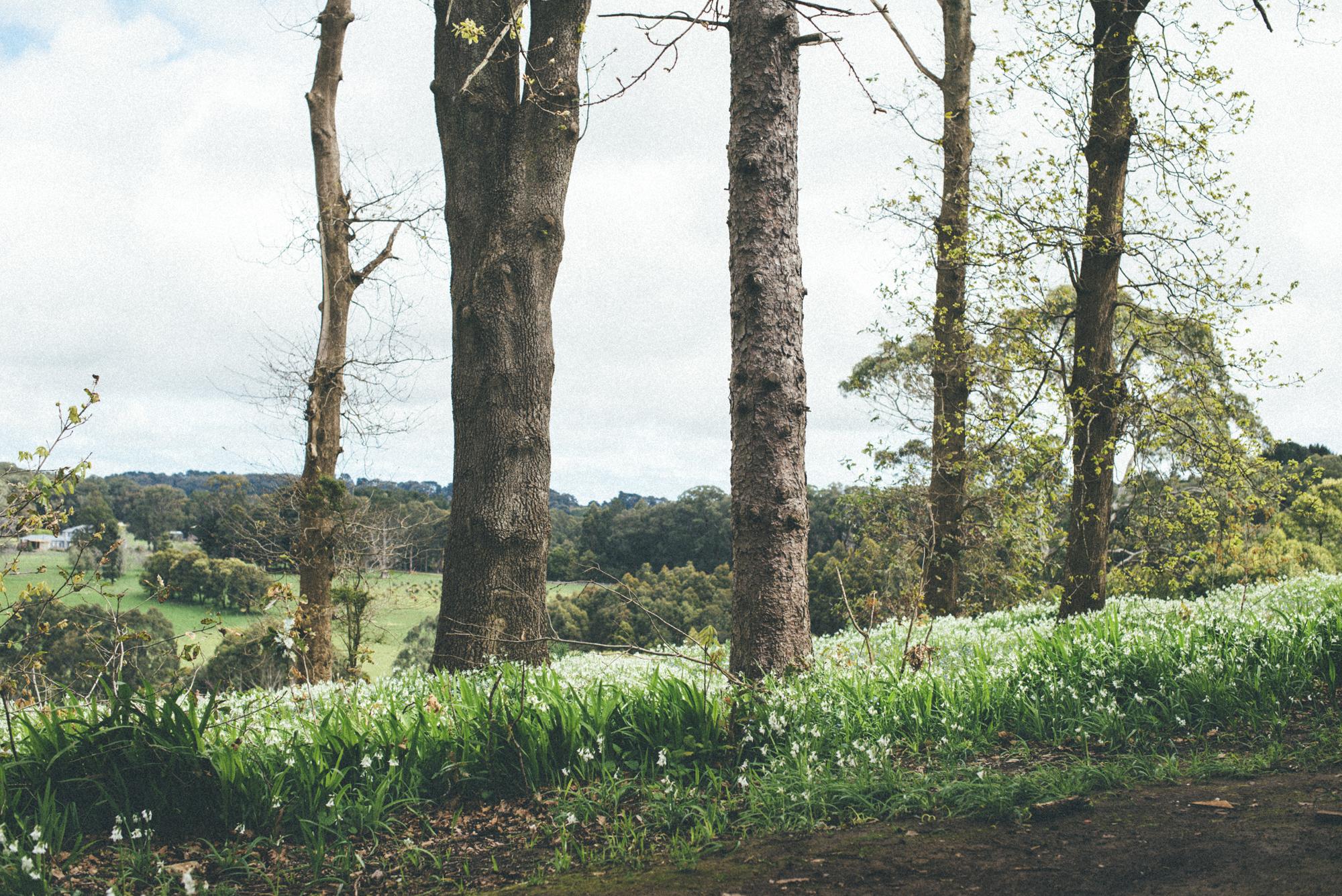 Countryside ii