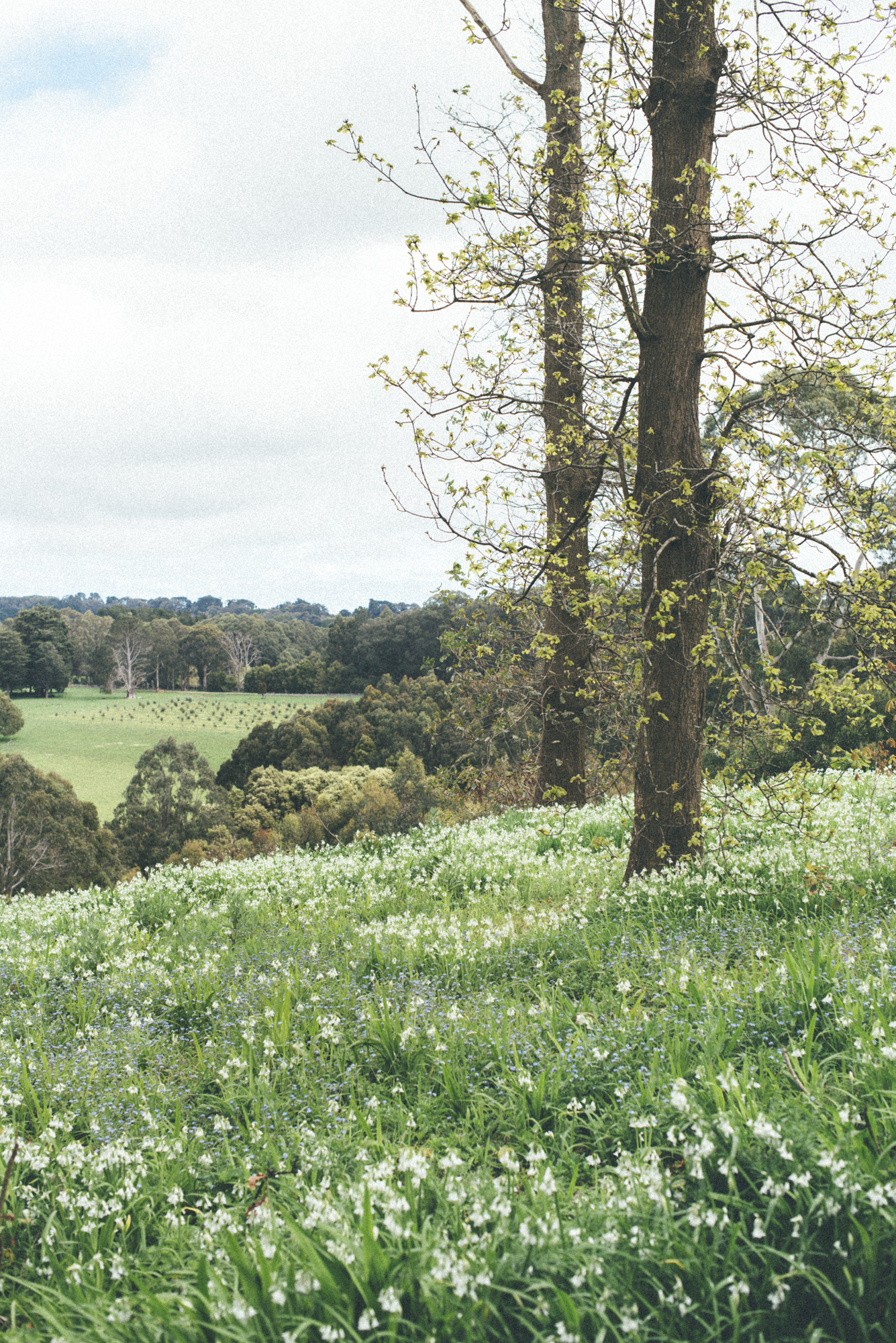 Countryside iii