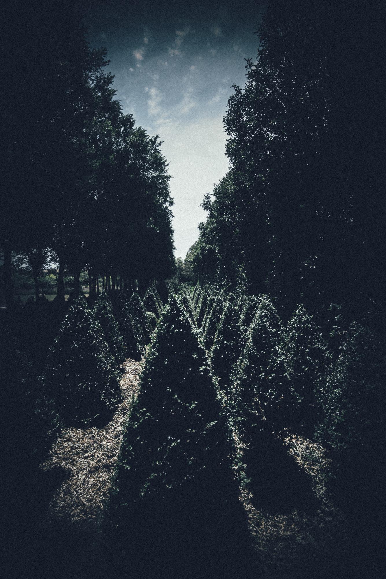 pointy hedge-1s.jpg