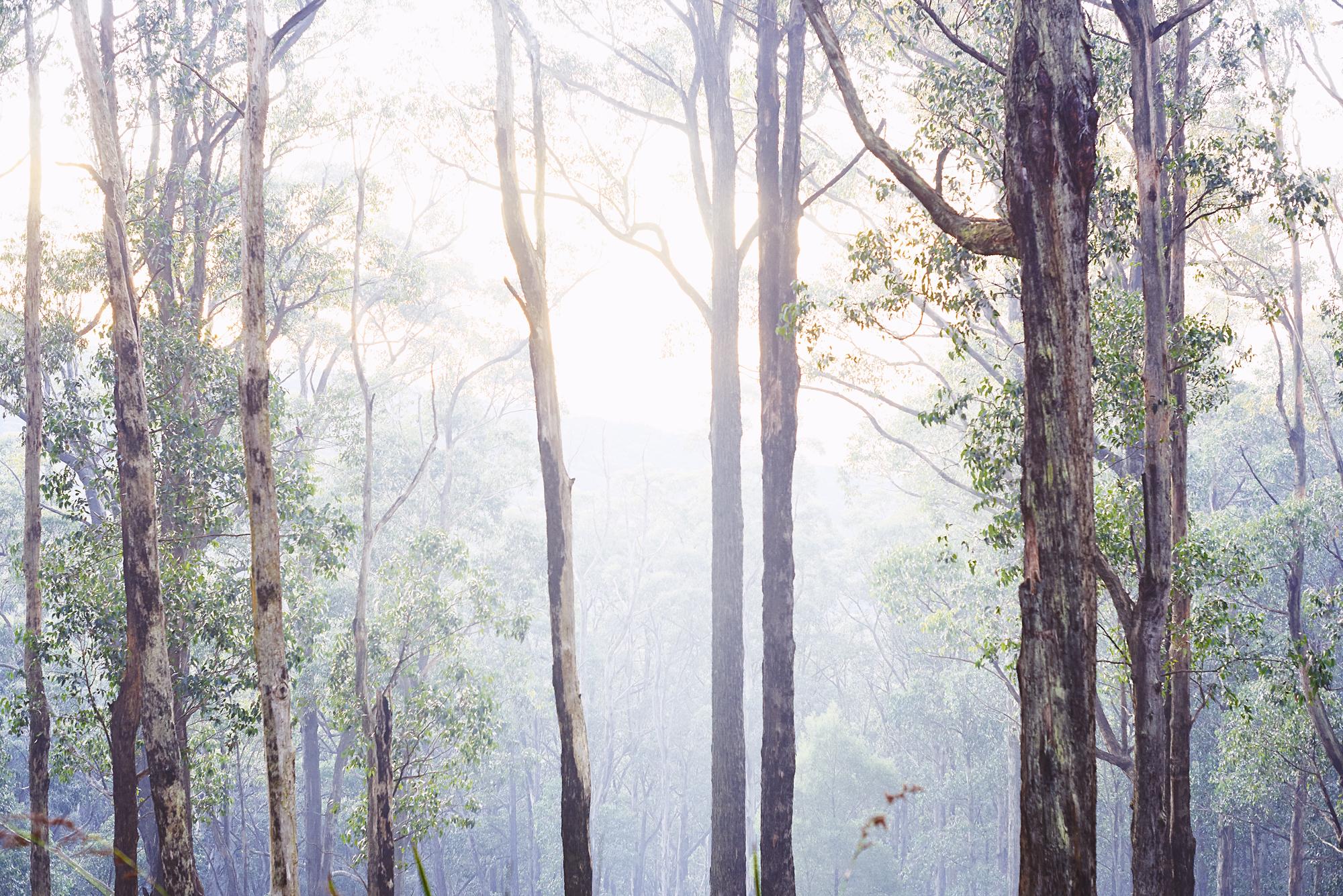 trees---ferney-creek.jpg