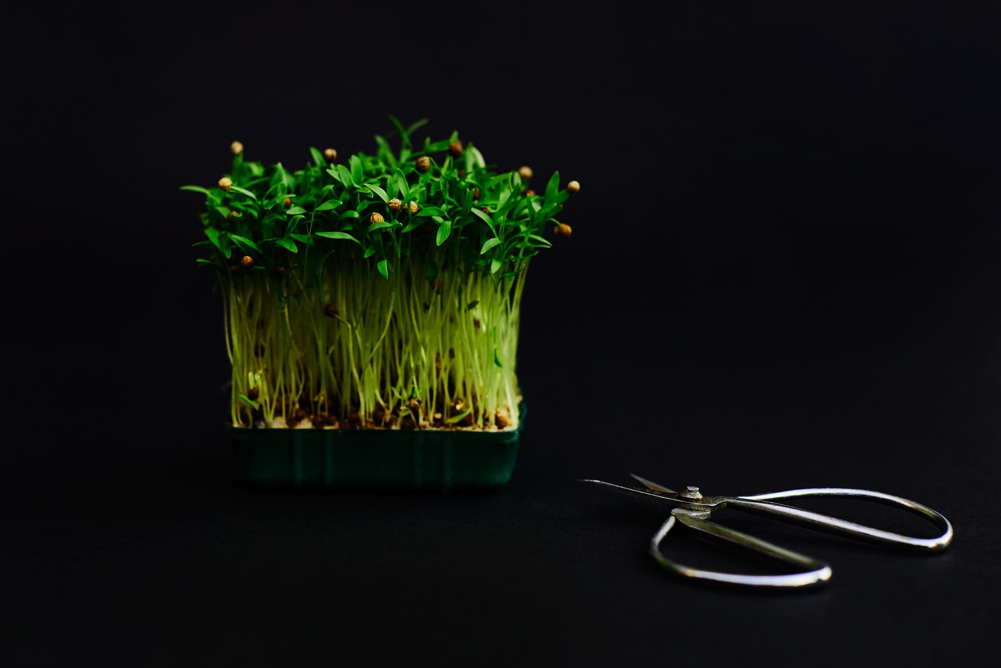 micro herbs
