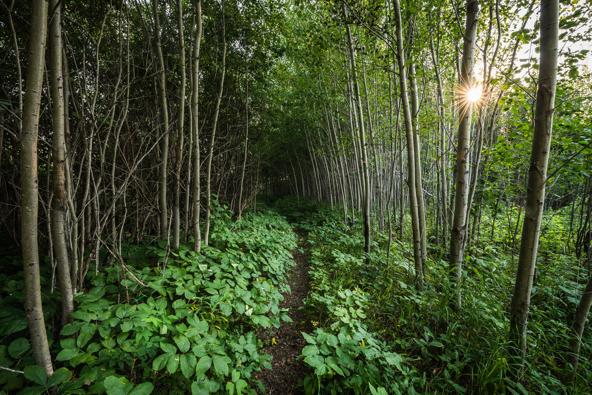Tunnel Trail [Explored]  by Jeff Wallace