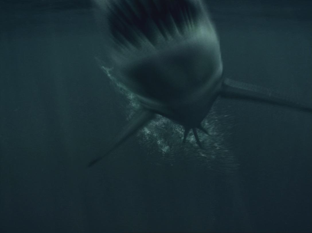 """GATORADE SHARK 30"""""""