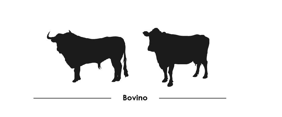 bovinos-32.jpg