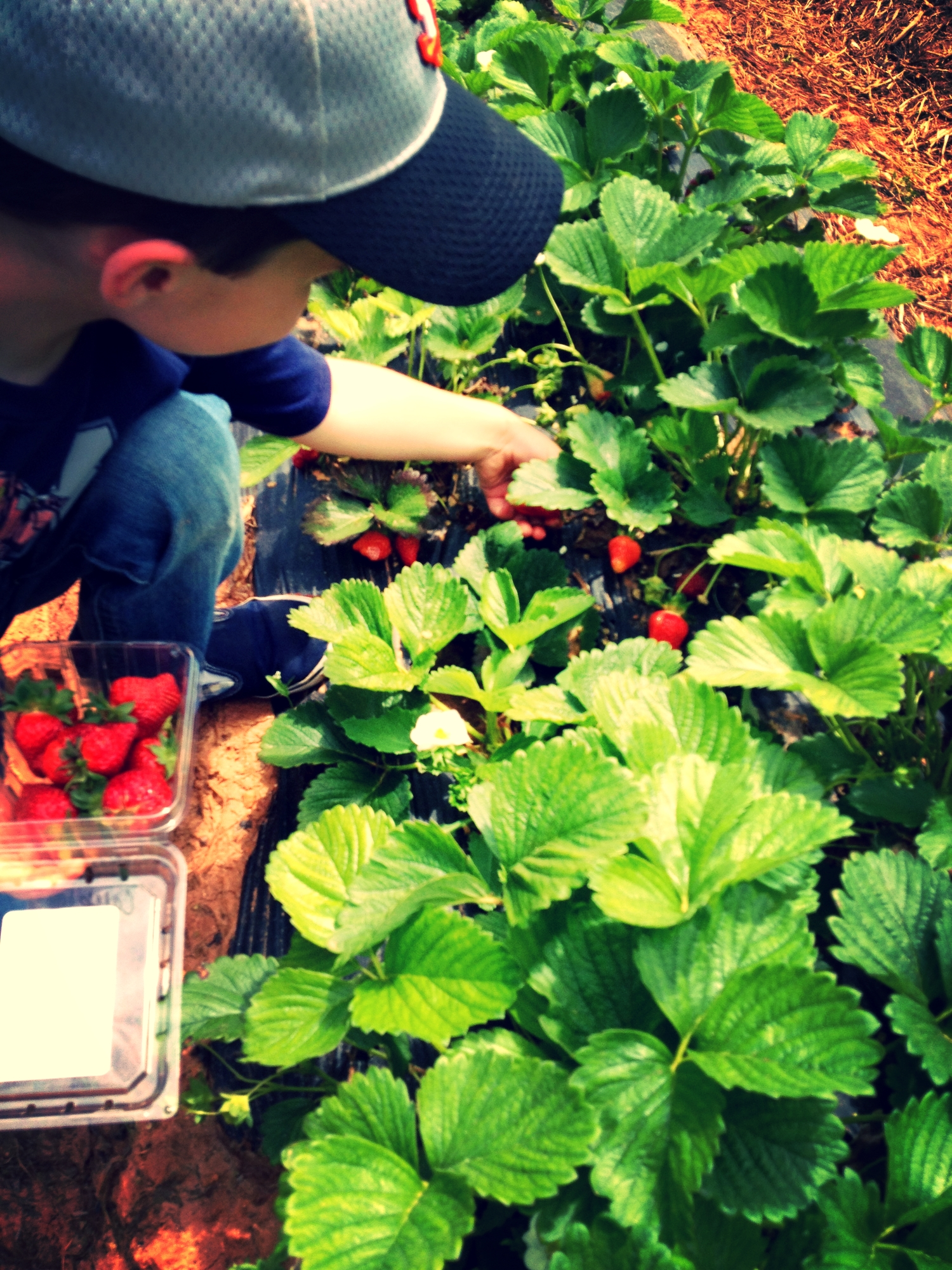 Pick fresh berries at your local farm. Support local, support your health.